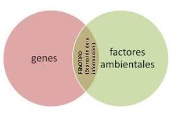 gen-ambiente